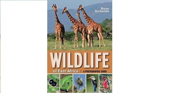Call for applications :Internews Earth Journalism East Africa Wildlife Journalism Media( Deadline: 25 October 2019, )