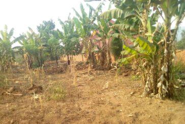 Ikibanza Giherereye i Kanombe ahantu heza havamo ibibanza 2 kigurishwa 25,000,000Frw