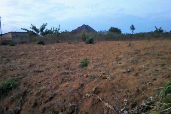 Cyamunara y'ubutaka buri mu kibanza gifite UPI 1/01/05/02/299 giherereye Nyarugenge/Mageragere: ( Deadline: 05 October 2020 )