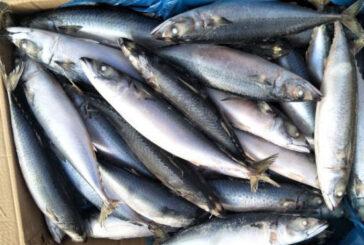 Thomson Fish Price: 2700 Rwf/ Kg Delivery Fees: 1000 Rwf