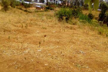 Cyamunara y'ubutaka buri mu kibanza gifite UPI 5/01/05/02/4340 giherereye Rwamagana/Kigabiro: ( Deadline: 05 October 2020 )