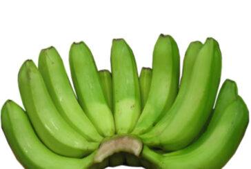 Green Banana/ Igitoki Price: 350 Rwf/ Kg Delivery Fees: 1000 Rwf