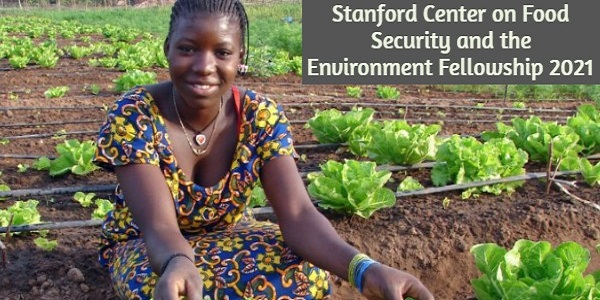 Stanford Center on Food Security and the Environment Fellowship 2021: (Deadline 1 December 2020)